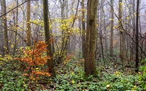Картинка осень, лес, деревья, природа, растительность