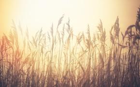 Картинка трава, природа, туман