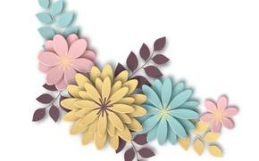 Картинка белый, цветы, бумага, фон, color