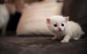 Картинка кошка, белый, кот, котенок, фон, диван, глазки, маленький, мордочка, постель, милый, подушка, котёнок, зайка, сидит, ...