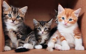 Картинка взгляд, кошки, поза, уют, котенок, фон, коробка, вместе, рыжий, котята, три, домик, котёнок, малыши, компания, …