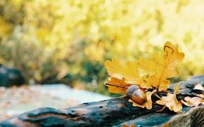 Картинка осень, листья, желудь, боке