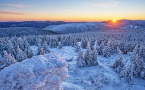Картинка зима, лес, снег, горы, восход, рассвет, холмы, утро, ели, Чехия, Czech Republic, Olomouc Region, Оломоуцкий …