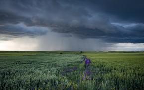 Картинка поле, лето, дождь