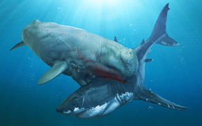 Картинка sea, attack, white shark, Sperm whale