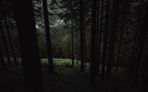 Картинка лес, деревья, природа
