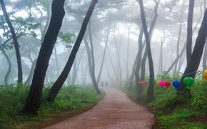 Картинка деревья, туман, парк, trees, park, fog, 류재윤
