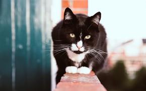 Картинка кошка, глаза, кот, взгляд, морда, яркий, поза, стена, улица, черный, высота, портрет, кирпичи, сидит, смотрит, …