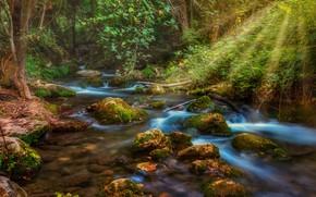 Картинка лес, вода, лучи, ручей, камни, мох, light, forest, rays, stream