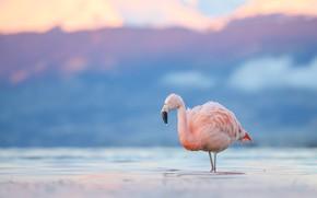 Картинка вода, капли, горы, природа, озеро, розовый, птица, фламинго, водоем, голубой фон, боке, розовый фламинго