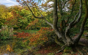 Картинка осень, лес, дерево