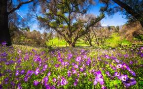 Картинка цветы, дерево, поляна