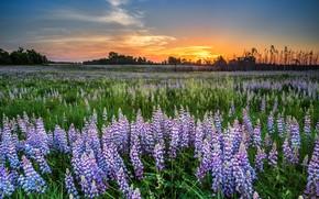 Картинка поле, лето, закат