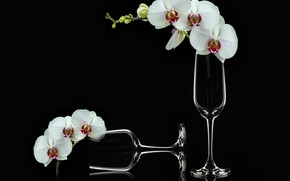 Картинка white, flowers, phalaenopsis, orchids, champagne glass, flowers bouquet, still life closeup