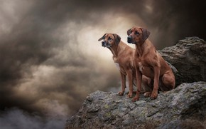 Обои собаки, небо, взгляд, облака, тучи, природа, поза, камни, фон, обрыв, скалы, вместе, дым, две, высота, ...