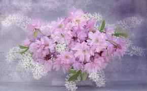 Картинка цветы, сакура, черемуха
