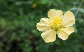 Картинка flower, nature, yellow, macro, colour