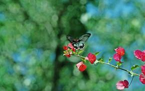 Картинка лето, листья, цветы, фон, бабочка, ветка, боке, бугенвиллия