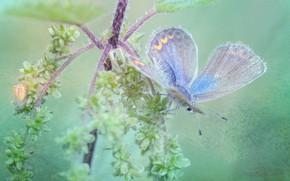 Картинка макро, бабочка, растение, обработка