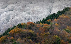 Картинка зима, осень, лес, Япония, Токусима