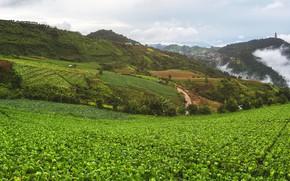 Картинка зелень, небо, облака, горы, поля, домики, Вьетнам, капуста, плантации, Mu Cang Chai