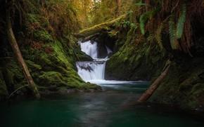 Картинка лес, река, водопад, мох, каскад, брёвна, Olympic National Park, Национальный парк Олимпик, Washington State, Штат …