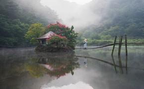 Картинка лес, пейзаж, природа, туман, озеро, пруд, парк, утро, мостики, островок, Южная Корея, павильон