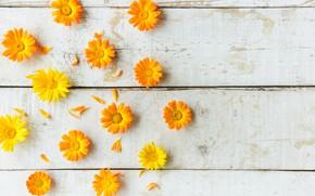 Картинка цветы, желтый, фон, календула