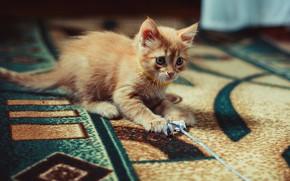 Картинка кошка, взгляд, поза, котенок, комната, узор, ковер, игра, малыш, рыжий, мордочка, котёнок, играет, бумажка, веревочка, …