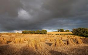 Картинка поле, лето, радуга, сено