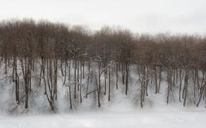 Картинка зима, лес, деревья, пасмурно