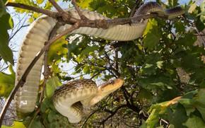 Картинка листья, ветки, змея