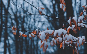 Картинка зима, листья, снег, деревья, ветка, сухие листья