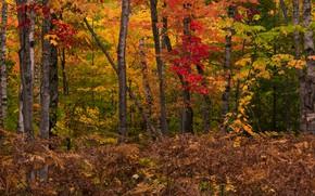 Картинка осень, папоротник, лес, деревья