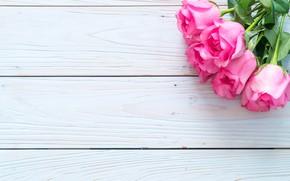 Картинка цветы, фон, розовый, розы, бутоны
