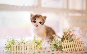 Картинка взгляд, малыш, котёнок, цветочки, заборчик