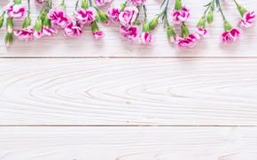 Картинка цветы, розовые, wood, pink, гвоздика, flowers