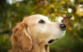 Картинка морда, бабочка, удивление, нос