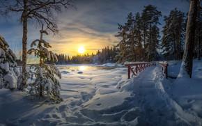 Картинка зима, парк, утро