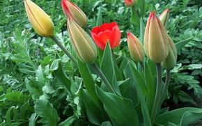 Картинка весна, тюльпаны, апрель