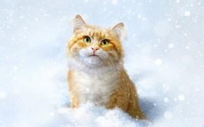 Картинка Зима, Кошка, Снег, Кот, Стиль, Морда, Арт, Art, Winter, Style, Snow, Cat, Illustration, Животное, Redhead, …