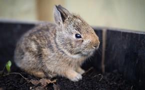 Картинка серый, земля, доски, кролик, мордашка, зайчик, боке
