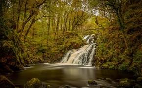 Картинка лес, вода, деревья, водопад