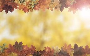Обои осень, листья, фон, дерево, colorful, wood, background, autumn, leaves, осенние, maple
