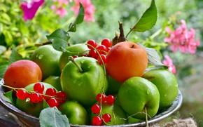 Обои яблоки, тарелка, фрукты, смородина, абрикосы
