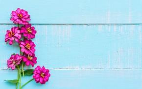 Обои цветы, фон, wood, blue, flowers, purple