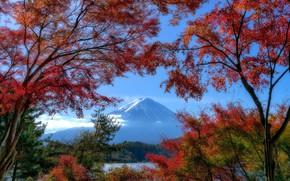 Картинка осень, деревья, озеро, гора, Япония, Japan, Mount Fuji, Фудзияма, Lake Kawaguchi, Озеро Кавагути, стратовулкан