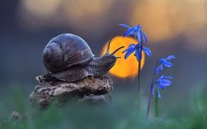 Картинка макро, цветы, природа, улитка, боке