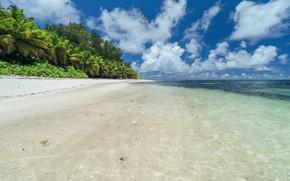 Картинка море, вода, пейзаж, природа, тропики, пальмы