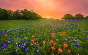 Картинка цветы, утро, луг